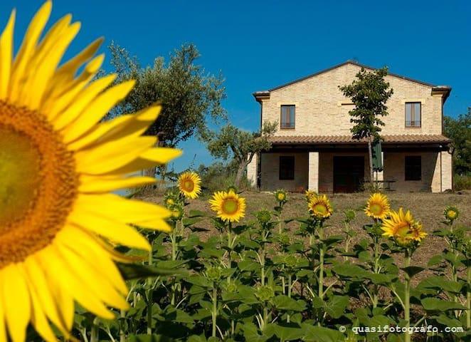 Immersa nel verde ulivi e vigneti - CARASSAI - Bed & Breakfast