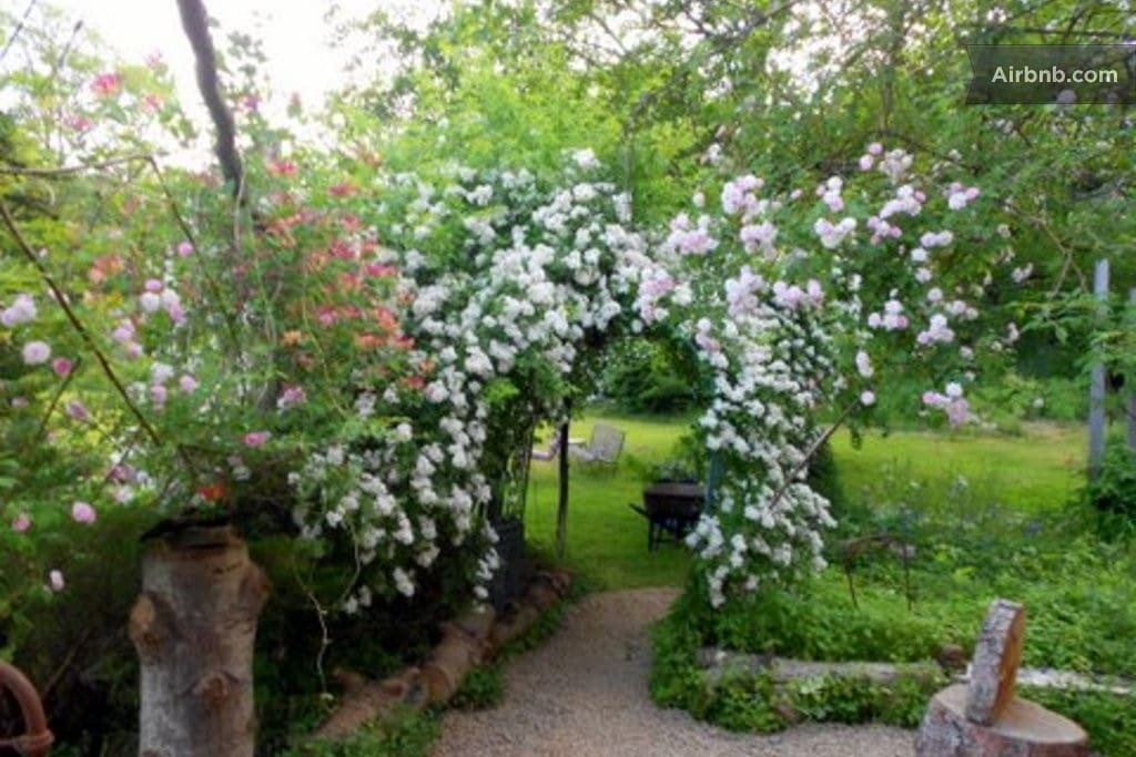 Walkway from porch to side yard with June roses in bloom