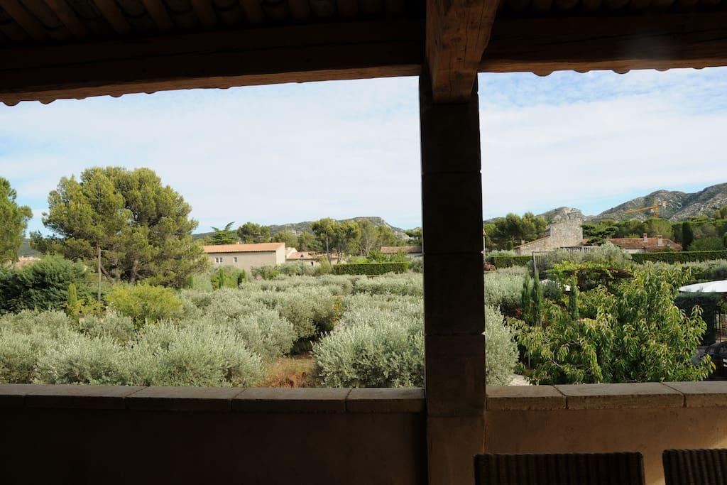 Zicht op les Alpilles, de olijfgaard