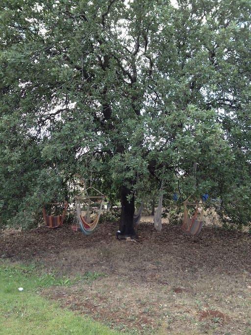 Hammocks tree