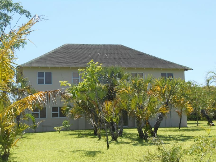 Ilala palms in front of main entrance