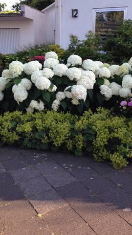 Ein Blick auf den blühenden Vorgarten .