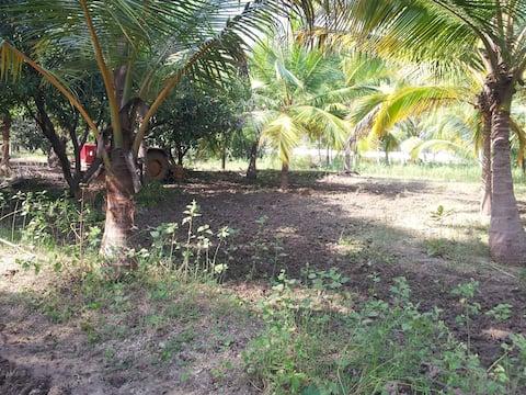 Farm Stay at MKM Farm, Thirupathur District
