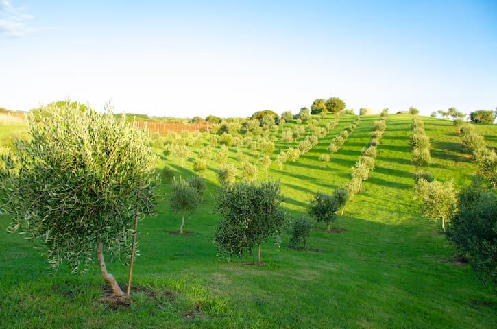 Devonlea Olive Grove - Fingal - House