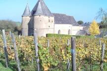 Eglise fortifiée et vignoble du village