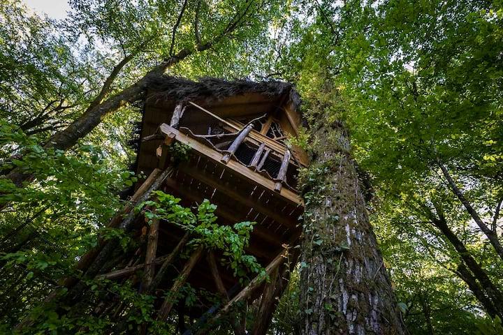 Cabane des Fées - Treehouse L'Arbre à Cabane