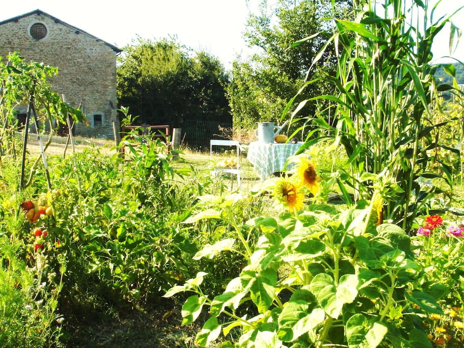 Vegetable garden at disposal of our guests.