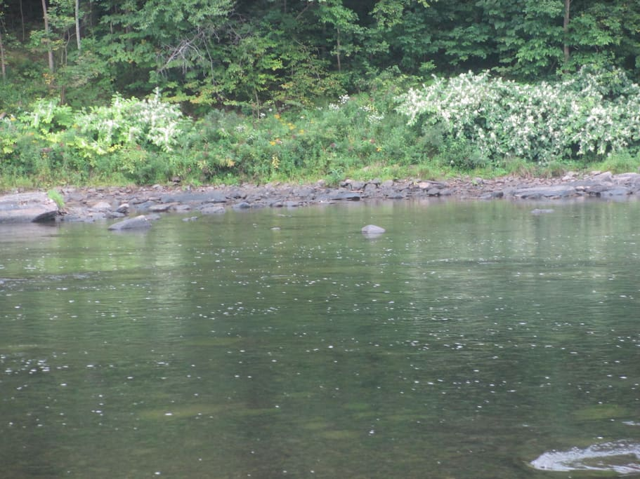 River at a low point - trout were jumping