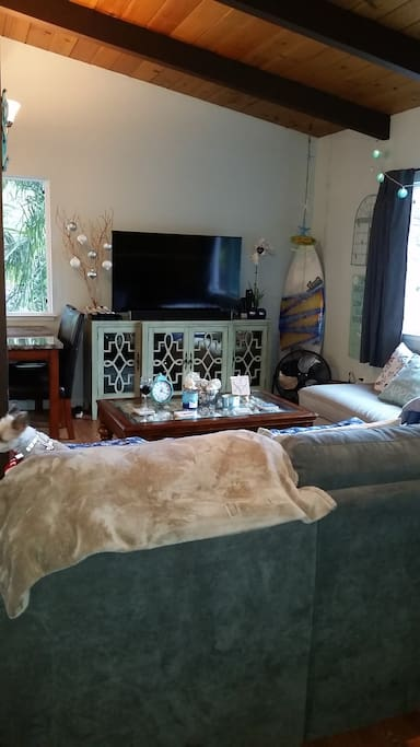 Cozy living area with sofa bed and side couch, dog not included.