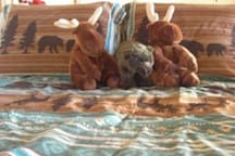 Full size double bunk beds in the loft.  Choose your snuggle partner wisely.