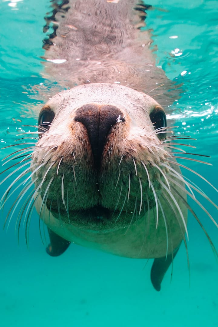 Close Up Sea Lion
