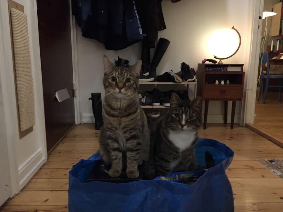 Entrance + cats.