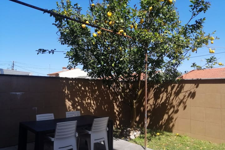 Lemon Tree Apartment