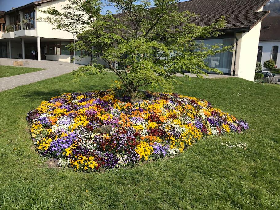Blumenbeet am See