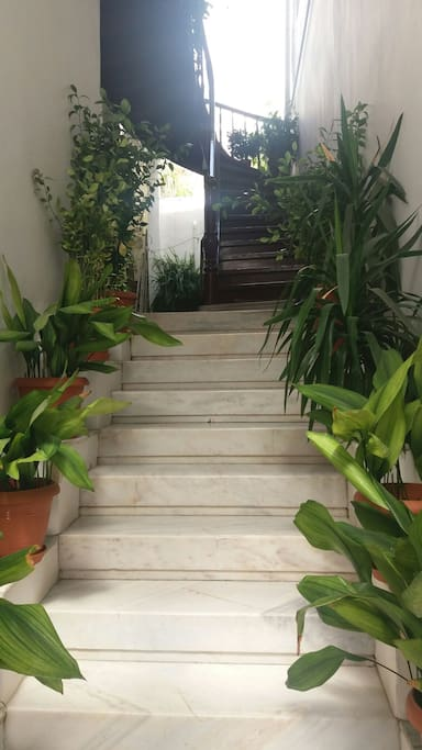 Front entrance stairs