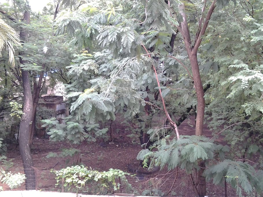 Densely wooded site from the apartment