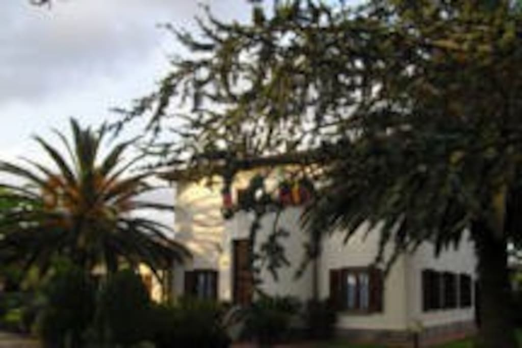 the main building and reception with palm