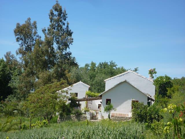 FINCA BARBARA - Setenil de las Bodegas - 家庭式旅館