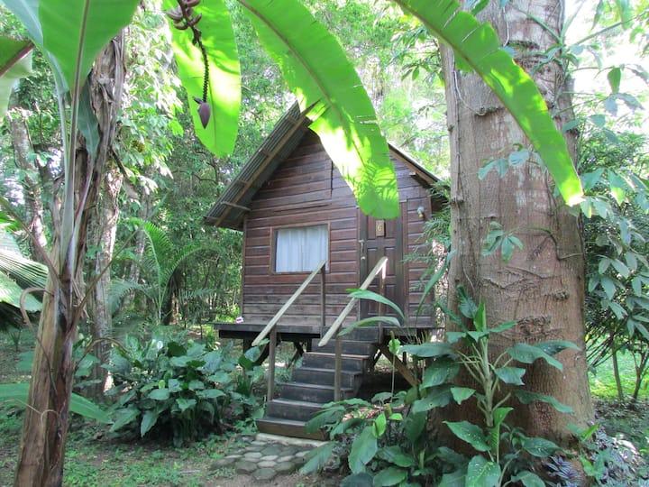 Parrot Nest Family Cabin (Gold Standard)