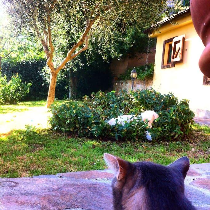 Giardino con gli animali di casa.. Dolcissimi..