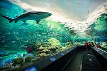 Enjoy the new Ripley's Aquarium while visiting the CN Tower.