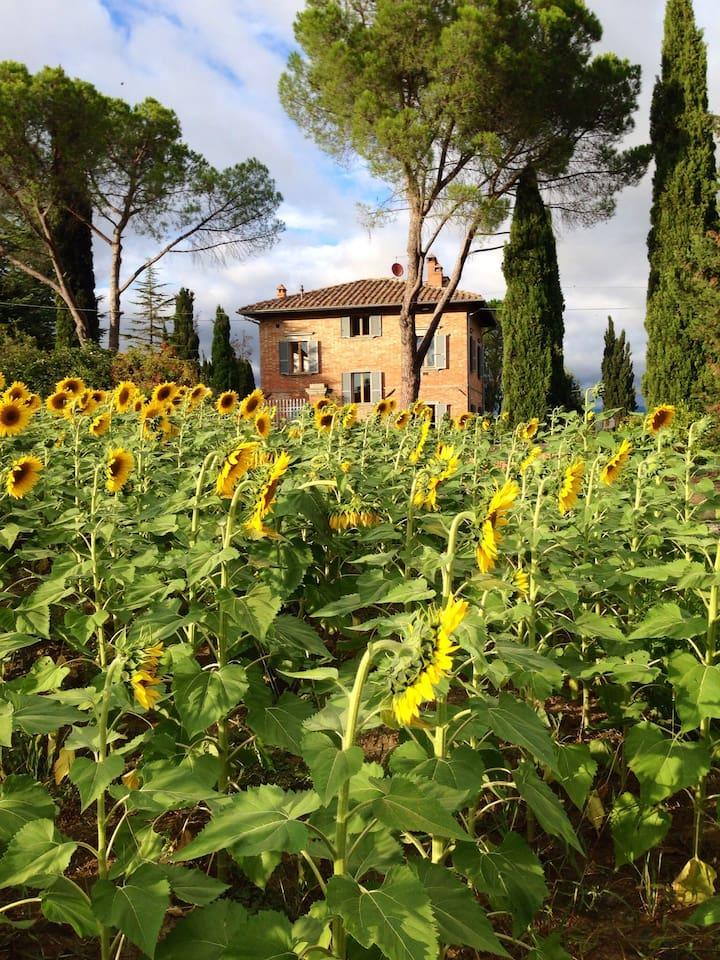 Villa with sunflowers