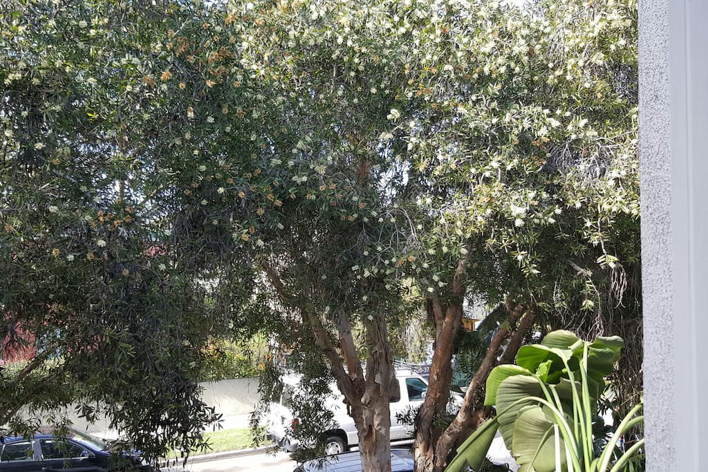 do eucalyptus tree right outside after apartment