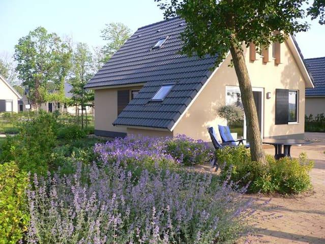 Sondel Friesebedstee Friesland - Sondel - Willa