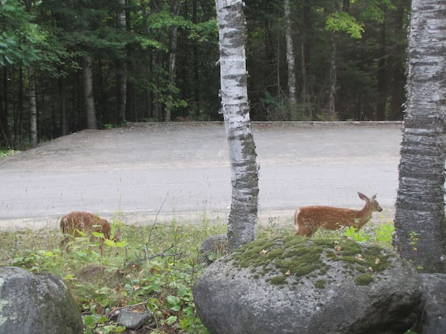 Wildlife outside the door with additional parking across the street in background.