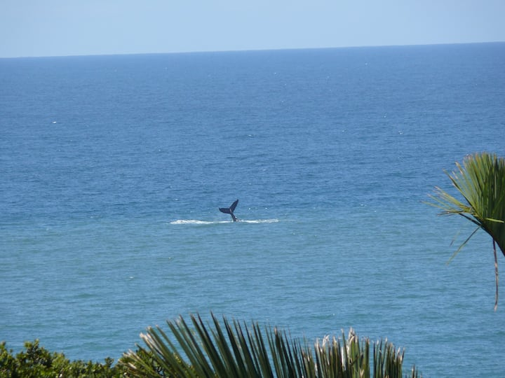 Watch Whales From The Balcony - Play Golf ALL Day.