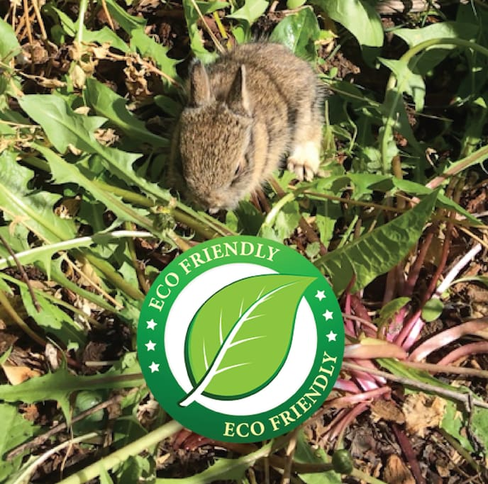 As animal and outdoor lovers, we pride ourselves on maintaining a home and property that is eco-friendly and safe for our local bird and rabbit population. We treat our lawn with only 100% natural and safe fertilizers.