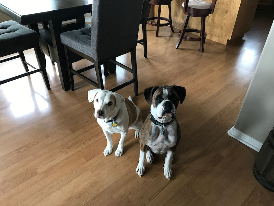 Chloe and Bozwell love to meet the guests