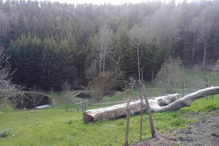 Wohnen im Camper auf einer Lichtung - Fuchsberg