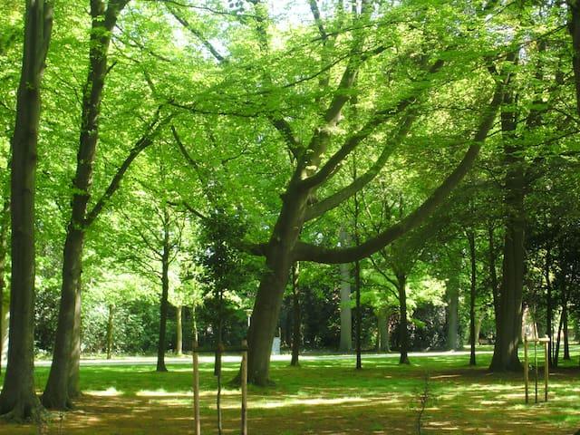 Park, Gut Altenkamp, Aschendorf , im vorderen Bereich.