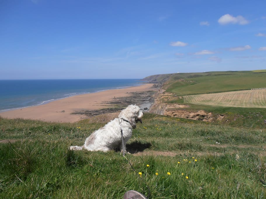 A dog's view! Well behaved-dogs and their owners welcome