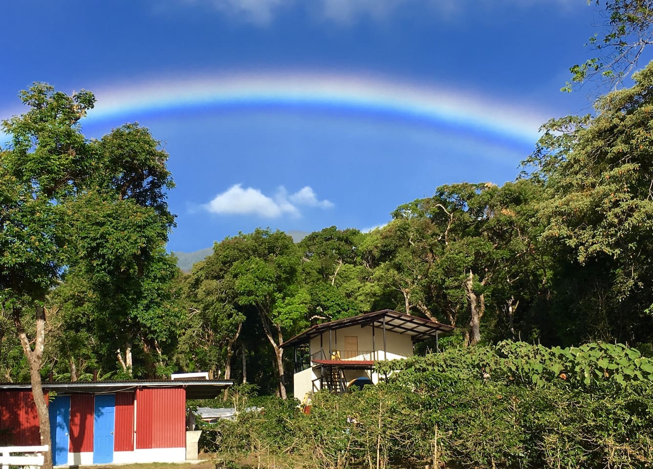 One of our may Rainbows | January - May