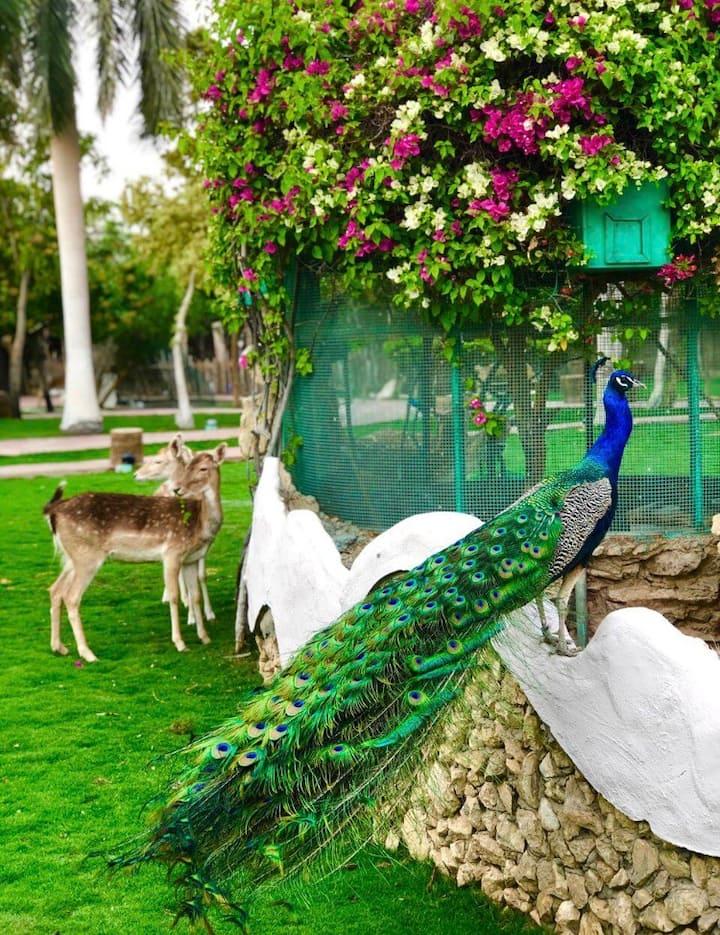 Peacock island Farm in the Nile, Heart of Cairo2/4