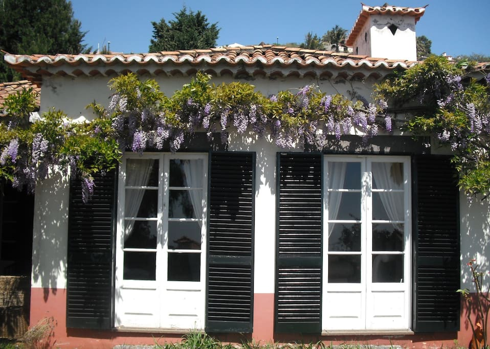 traditional portuguese house h user zur miete in funchal madeira portugal. Black Bedroom Furniture Sets. Home Design Ideas