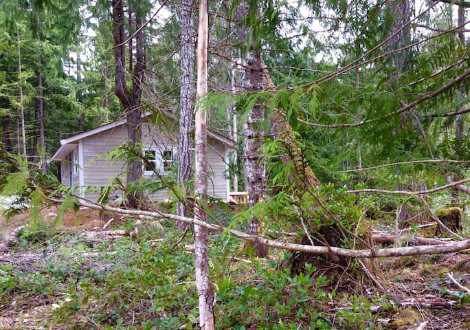 The cottage is nestled into the edge of our woods, about 600 feet from our house, and very private.