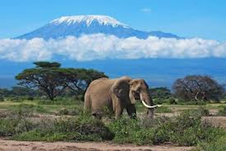 KILIMANJARO MAD MONKEY'S HOSTEL & BACKPACKER'S