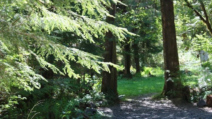 Sol Duc Rain forest camp spot 3