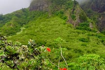 Iao Valley State Monument.  If you like to hike.