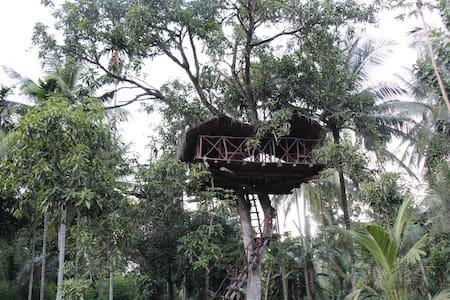 Xotic Resort