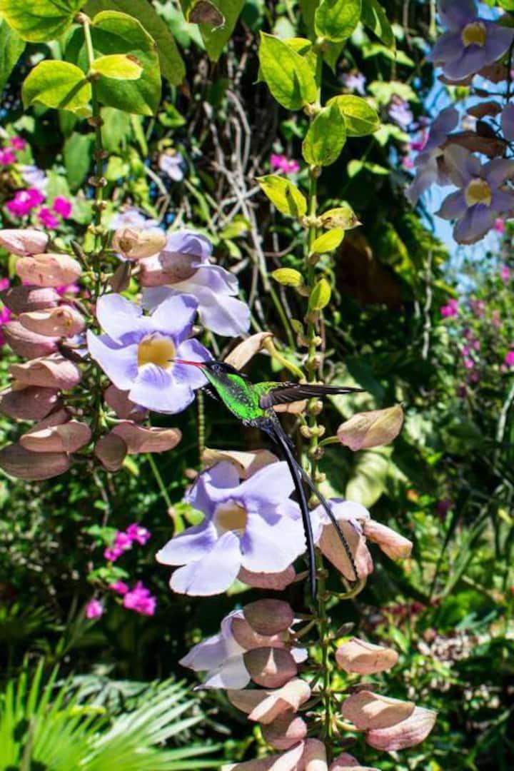 Enjoy exotic flowers.