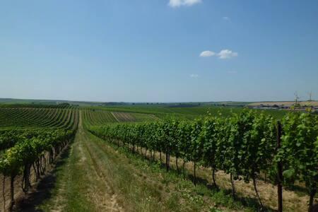 Pokoj ve vinařské obci Čejkovice - Čejkovice - Σπίτι