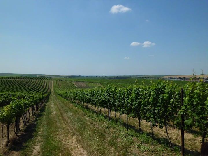 Pokoj ve vinařské obci Čejkovice