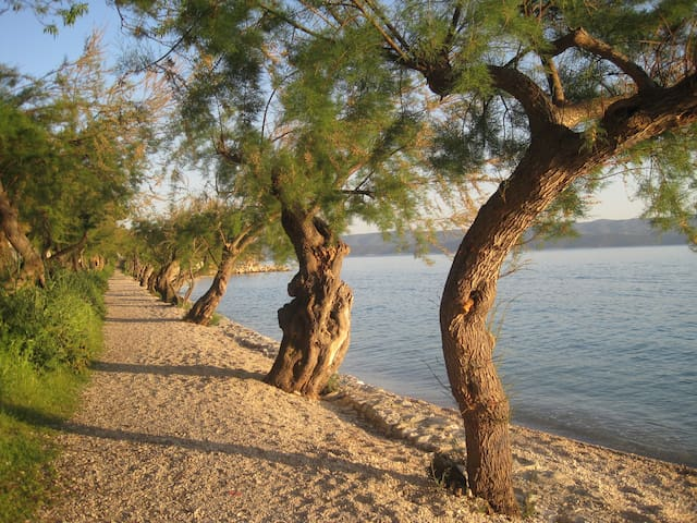 beach Slavinj
