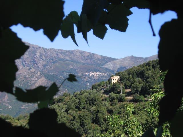 Maison typique  vue vallée du Golo - Castello-di-Rostino