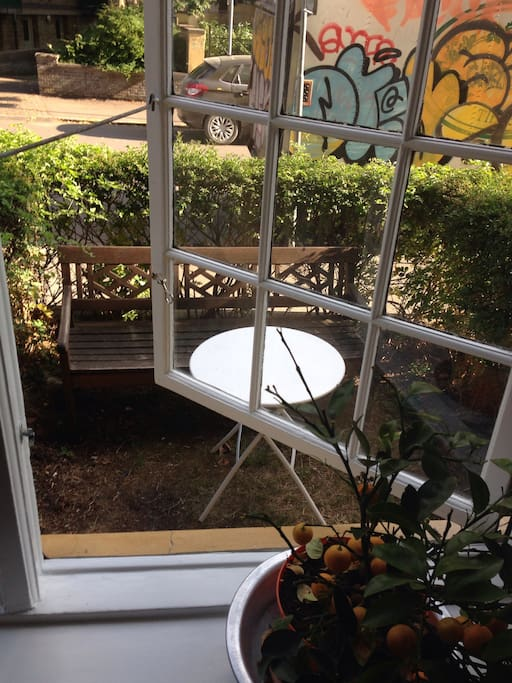Garden outside living room