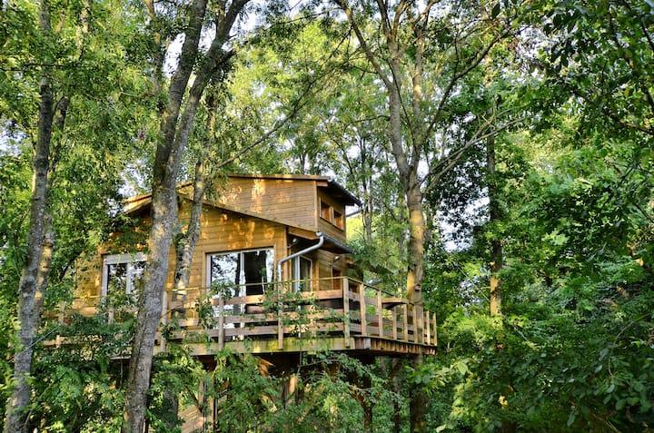Cabane dans les arbres Paris Disney Provins